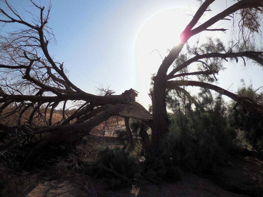arbre après tempête