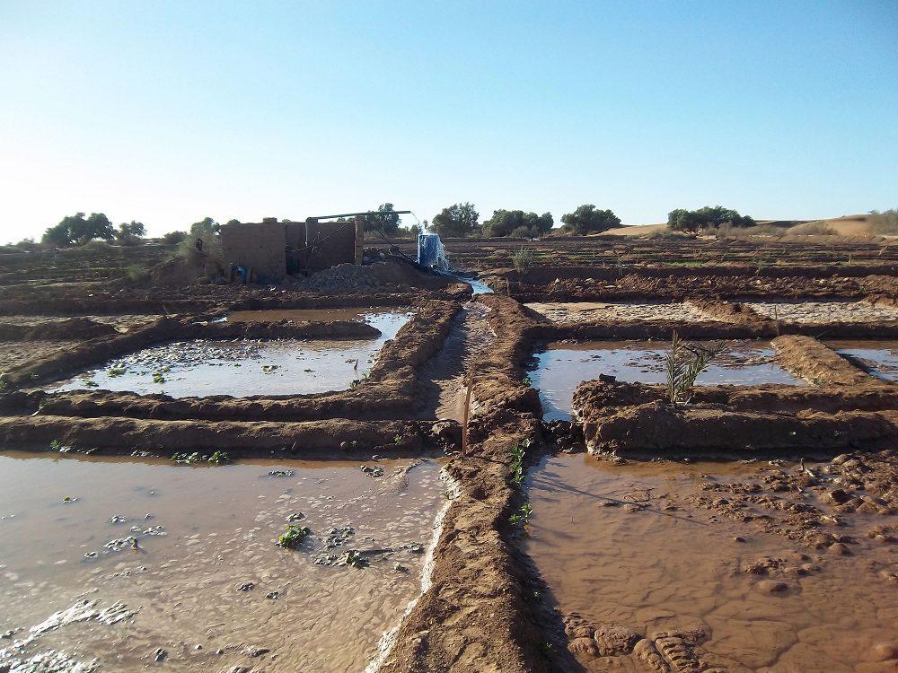 Octobre 2012 - Irrigation de la parcelle
