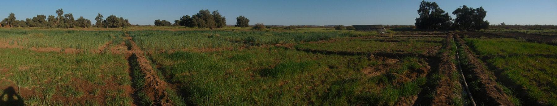 champs et tuyaux